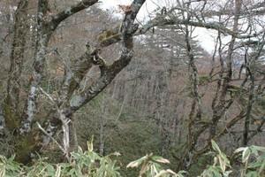 2009050518原生林が広がる.jpg