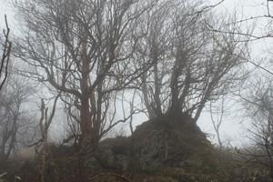 2009050522石の上に木.jpg