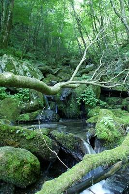 20090615二ッ岳12水場.jpg
