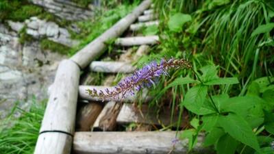 20100808iyofuji01kugaisou.jpg