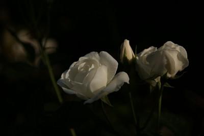 20110515ib.jpg