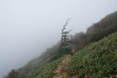20180927Sasagamine37_trail.jpg