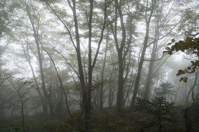 20180927Sasagamine59_forest.jpg