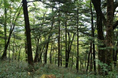 20180927Sasagamine68_forest.jpg
