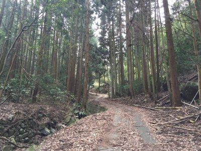 20190227Yahazu-Nyotai22.jpg