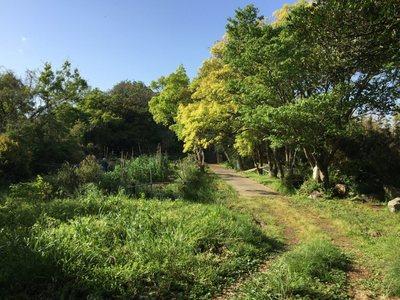 20190427Yashima32.jpg